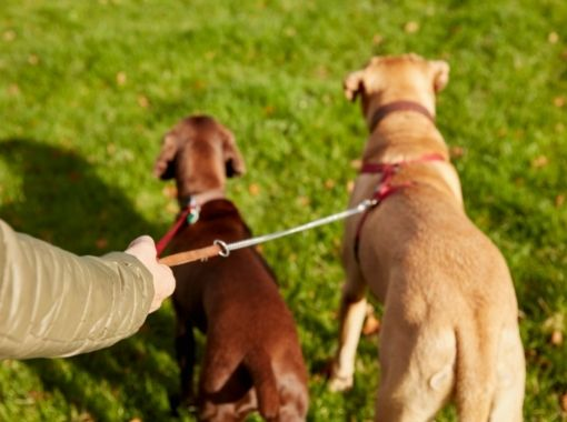 services-daily dog walks